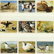 9er Streichholzetikettenserie 65 - mit Wasservögel