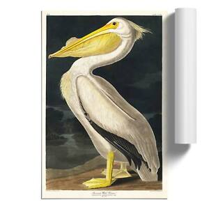 American White Pelican Wall Art Poster Print Bird John James Audubon