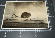1930's Mouse Light Spec Glows Trapped Like A Rat Rodent Vintage Snapshot Photo