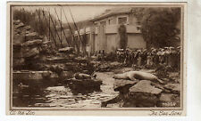 At The Zoo - The Sea Lions - Photo Postcard c1930