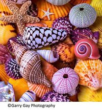 Ocean Treasures (145 Piece Wooden Jigsaw Puzzle)