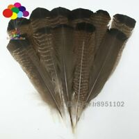 Broken natural 10 pcs precious wild turkey tail feathers 10-14inches / 25-35cm