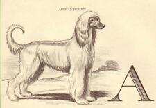 Afghan Hound - Vintage Dog Print - 1954 Megargee