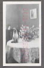 Vintage Snapshot Photo Unusual Siamese Cat on Dining Room Table 697476