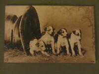 Vintage 1920's Dog Photograph Postcard