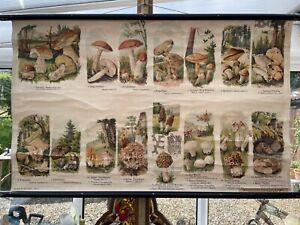 Vintage WILD MUSHROOMS school chart BOTANICAL educational wall charts FUNGI