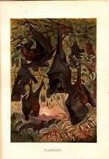 1890 Brehms Flying Fox Fruit Bat Antique Chromolitograph Print
