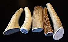 1 Small Elk/Deer Whole Antler Dog Chew..Free Shipping...100% Natural And Healthy