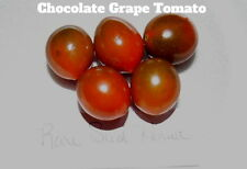 Chocolate GrapeTomato Seeds! Great Taste!  Comb. S/H See our store!