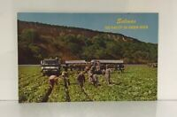 """1950s Salinas Valley """"The Valley of Green Gold,"""" California Vintage Postcard"""