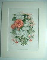 Antique c1880 Chromolithograph Botanical Print in Mount WOODY GREENHOUSE FLOWERS