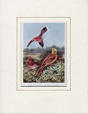 British Birds (Wren, Turtle-Dove, Yellow Hammer) Antiquarian Print