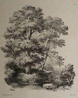 HUBERT (1801), Naturstück, Bäume am Ufer eines Baches, 1850-80, Lithographie