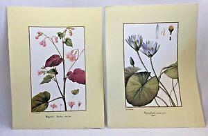 Set of 2 Botanical Art Prints Pictures P.J. Redoute Flowers 10x13 Artwork 3076F