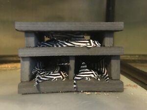 Hypancistrus Zebra L046 / L46 Pleco