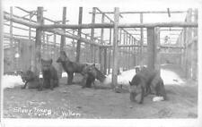 RPPC SILVER FOXES CARCROSS YUKON CANADA ALASKA REAL PHOTO POSTCARD (c. 1930s)