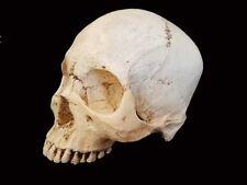 Human Skull Life Size Replica Halloween Film Prop High Detail
