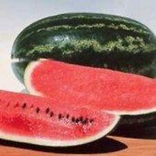 NonGMO Heirloom CONGO Watermelon 100 SEEDS SWEETEST Heavy Yields LARGE 35-40 lbs