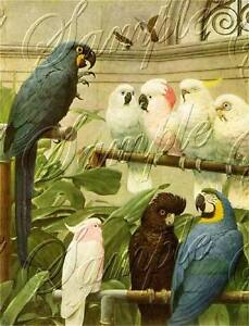 VINTAGE PARROTS MACCAW BIRDS AVIARY song CANVAS ART PRINT