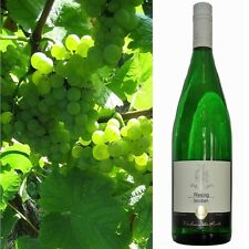 Riesling trocken 2017 Weinhaus Dieter Kuntz 18 Literflaschen Wahnsinns Weißwein