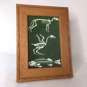 Vintage Style Animal Skeleton Framed Print Picture Wood Frame Glazed 19x14cm
