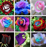 100Pcs Rose Flowers Seeds Rare 14 Kind Colors Decoration Plants in Home Garden