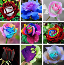 100Pcs Rose Flowers Seeds Rare 14 Kind Colors Decoration Plants in Home Garden