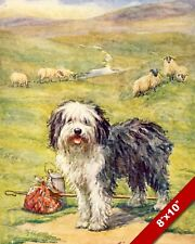 HAPPY OLD ENGLISH SHEEPDOG IN FIELD DOG ART PAINTING PRINT ON REAL CANVAS