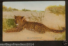 NEW YORK 456-Zoological Park -2080 Indian Leopard Cub