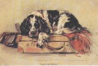 English Springer - MATTED Dog Print - Lucy Dawson NEW