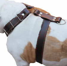 "German Shepherd High Quality Leather Walking Dog Harness 30-35"" chest, wide 1.5"""