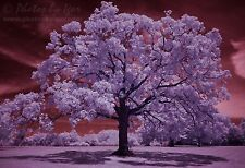 The Tree of Life - Infrared Photography - Fine-Art Print / Photograph