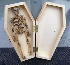 "(1) 6"" Skeleton & Halloween Hinged Unfinished Vampire Coffin Casket Craft"