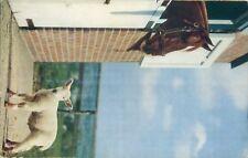 Horse and sheep lamb