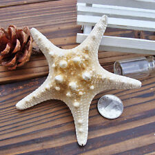 2pcs Natural Starfish Sea Star shell Aquarium Landscape Making DIY Craft Decor