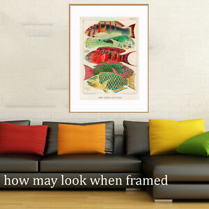 Vintage print poster fishing fish reef  large art Australia for glass frame A1