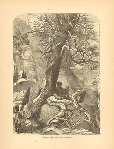 Virginia, Natural Bridge, Landscape View, Artist, Vintage, Antique Art Print,