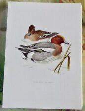 Lámina de Cartel Poster Art Print Estampa Pájaros Canard Se Activa con Silbido