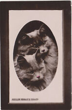 Vintage Cat Postcard,2 Cats in Oval Vignette,Hello! What's That?,Embossed,c.1909