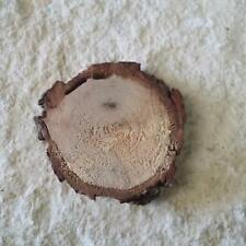 """Pecan Wood Slice Wooden Disc Tree Branch Circle Round 2.25"""" 1pc Untreated"""