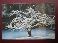 POSTCARD PLUM TREE COVERED IN SNOW