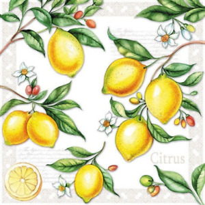 20 Paper Party Napkins Citrus Lemons  Pack of  20 3 Ply Tissue Serviettes