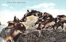 B98438 seal onj their native rocks sceau  animal animaux