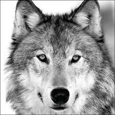 5 Papel Fiesta Servilletas Wolf Pack de 5 3 Capas Tejido Bellos Animales