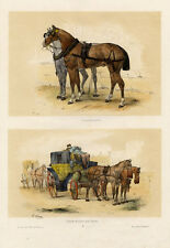 Hippisme Victor Adam Chevaux Fiacre Cheval Lithographie originale Equestre XIXe