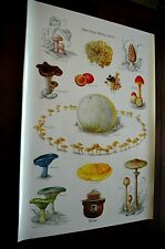 U. S. Forest Service Poster-Have Fungi! But be Careful Please 20x30 Mushrooms