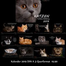 Kalender 2019 Quer Fotokalender Katzen Katzenkalender DIN A3 zu Gunsten Tierheim