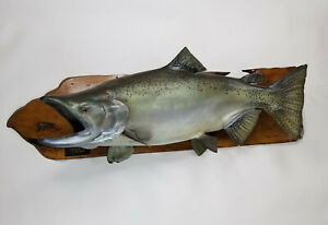 """Vintage Chinook King Salmon 41"""" Mount Taxidermy By Trophy Fish Paramount CA"""