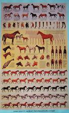 HORSE INFORMATION CHART by SAM SAVITT - 14-1/2 x 22
