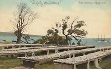 Antique POSTCARD c1910s Fish Drying DIGBY, NS CANADA 19051